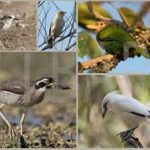Birds directory ,Rare Species and endemic Bali
